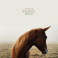 paard ligt nooit